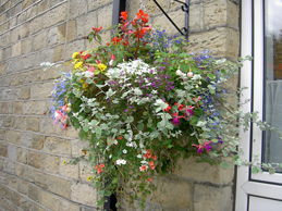 hanging-basket-with-flowers-protected-against-drought-with-Flood-Trap